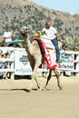 International Camel Races in Virginia City, NV, US Royalty Free Stock Photography