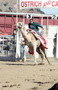 International Camel Races in Virginia City, NV, US Royalty Free Stock Photos