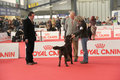 International dog show Royalty Free Stock Photo