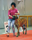 International dog show spring petersburg Royalty Free Stock Image