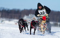 International Dog sledding race Stock Image
