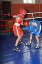 International Junior championship Boxing in Gomel (Belarus). Royalty Free Stock Images