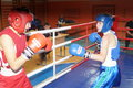 International Junior championship Boxing in Gomel (Belarus). Stock Photos