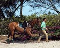 International polo club wellington florida joe pony being brought onto the field Stock Images