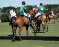 International polo club wellington florida joe tonkawa green uniform defeated los machitos heathcote white uniform Royalty Free Stock Image