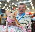 Internationale Ausstellung der Katzen Lizenzfreies Stockbild