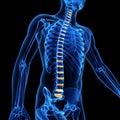 The intervetebral discs medical d illustration of Royalty Free Stock Image