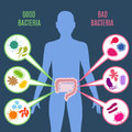 Intestinal flora gut health vector concept with bacteria and probiotics icons Royalty Free Stock Photo
