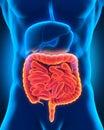 Intestinal internal organs d render Royalty Free Stock Photo