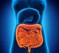 Intestinal internal organs illustration of d render Royalty Free Stock Photos