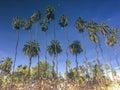 Inverse Palm Tree Reflection A...