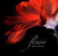Invert soft focus flower background with copy space. Royalty Free Stock Photo