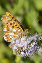 Invertebrates of nature details a beautiful butterfly in Royalty Free Stock Photo