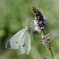 Invertebrates of nature enjoying a lovely butterfly flower Stock Photography