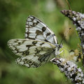 Invertebrates of nature precious details a white butterfly Royalty Free Stock Images
