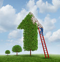 Investing advice financial help tree shaped as upward arrow missing leaves branches businessman climbing red ladder to inspect Stock Image