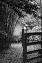 Inviting gate framed by bamboo welcoming the onlooker into the yard Royalty Free Stock Photography