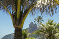 Ipanema Beach Rio de Janeiro Brazil Palm Trees