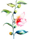Ipomea flowers illustration watercolor painting Royalty Free Stock Images