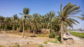 Iraqi countryside a picture of the that contains plantation and palm trees and the houses plastic for seasonal crops Stock Image