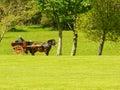 Ireland killarney national park characteristic jaunting car Royalty Free Stock Image