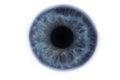 Iris of a blue clean human eye Royalty Free Stock Photo
