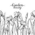 Iris flower and leaves border drawing. Vector hand drawn engraved floral seamless pattern