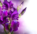 Iris flowers art design beautiful violet flower Royalty Free Stock Photos