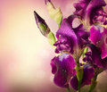 Iris flowers art design beautiful violet flower Stock Photography