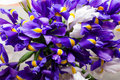 Iris flowers background, spring floral patern. Royalty Free Stock Photo