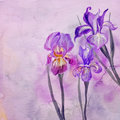 Iris flowers illustration Stock Images