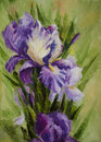 Iris flowers picture oil paints on a canvas Royalty Free Stock Photo