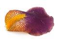 Iris petal. Macro Royalty Free Stock Photo