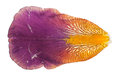 Iris petal Royalty Free Stock Photo