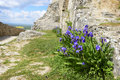 Iris in Sumeg castle, Hungary Royalty Free Stock Photo