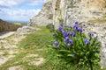 Iris in Sumeg castle, Hungary Royalty Free Stock Photo