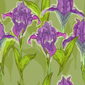 Iris summer pattern with lilac Stock Photo