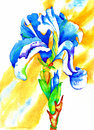 Iris watercolor the is a beautiful and showy flowering plant irises are grown from bulbs and have sword shaped leaves and erect Stock Photos