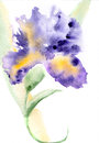 Iris watercolor illustration hand drawn floral Stock Images