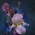 Irises bouquet stylized design on dark background