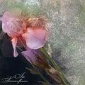Irises bouquet stylized design on grey background