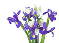 Irises with eustoma on a white background bouquet of isolation Stock Photography