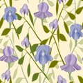 Irises Floral Pattern - Vector
