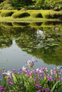 Irises in Imperial Palace Gardens Royalty Free Stock Photo