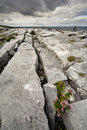 The Irish Burren Royalty Free Stock Image
