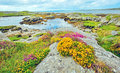 Irish landscape coast in summer time Royalty Free Stock Photos