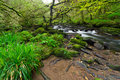 Irish nature scenery with creek Royalty Free Stock Photo