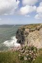Irish pink wildflowers on the cliffs edge