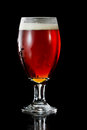 Irish red ale closeup of an served in a chalice over a black background Royalty Free Stock Photo
