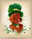 Irish Setter Royalty Free Stock Photography